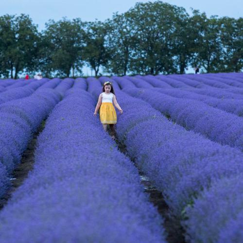 Photo Story: Lavender field in Moldova