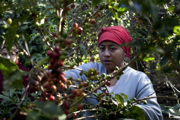Coffee prices surge as unusual cold threatens Brazilian production