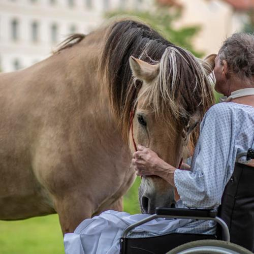 Photo Story – Horse  Touch Therapy in Prague