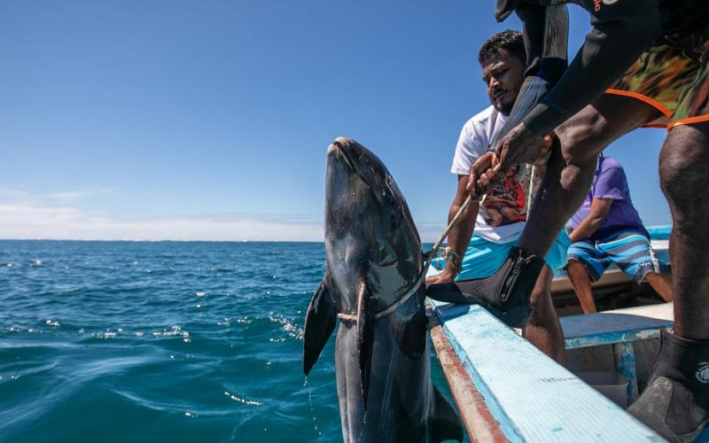 PhotoStory – Dolphin's deaths in Mauritius
