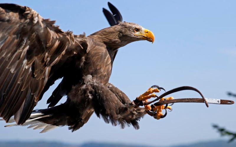 Photo Story: The Bird Show at Deutsche Greifenwarte in Hassmersheim
