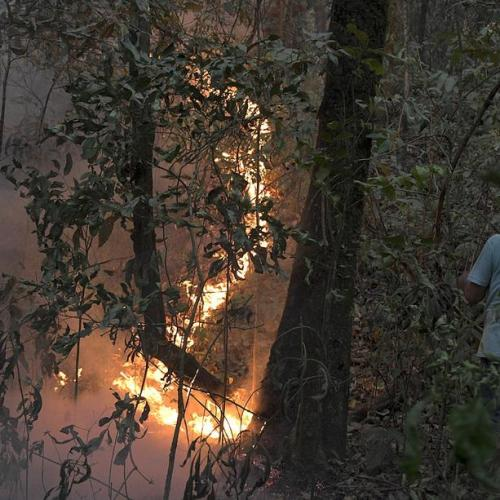 Brazil's Amazon fires worsen in September