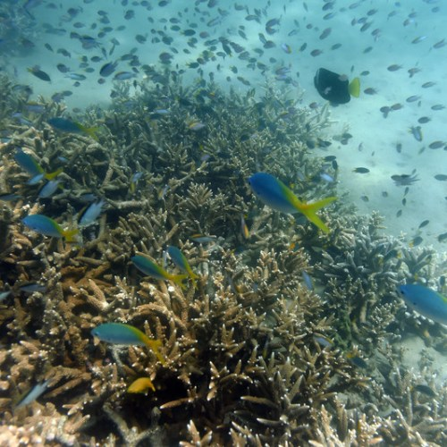 Australia's Great Barrier Reef status lowered to critical and deteriorating