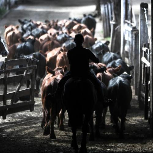 Photo Story: Argentine beef consumption falls to its all-time low
