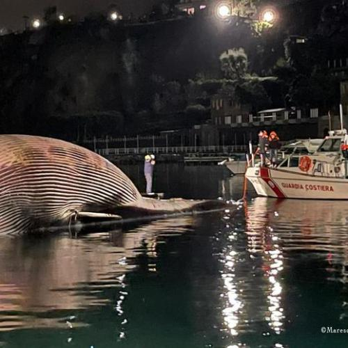 UPDATED: Dead whale removed from Italian port of Sorrento