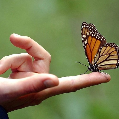 Population of Mexico's monarch butterflies falls 26%