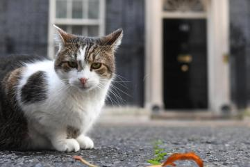 Withstanding the test of time – Larry celebrates a decade at 10 Downing Street