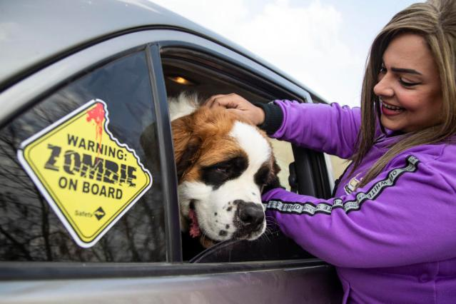 Photo Story: The 'Aleefcom' pets transport service in Egypt