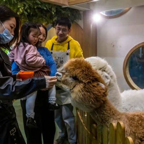 As WHO highlights COVID animal origins, China wildlife crackdown needs more teeth – experts