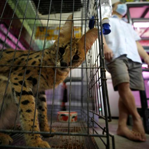 WHO, agencies urge countries to suspend sale of live wild mammals at markets
