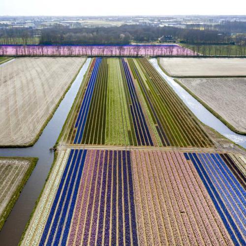 EPA'S Eye in the Sky: Lisse, the Netherlands