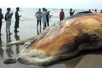 Photo Story: Whale carcass washes ashore in Bangladesh