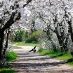 Photo Story: Spring in Bucharest
