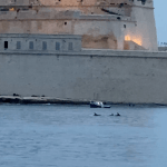 Dolphins spotted in Malta's harbour
