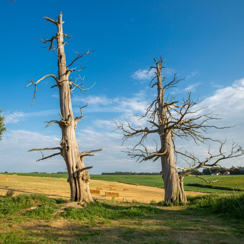 MEPs say EU needs legally binding targets to protect nature