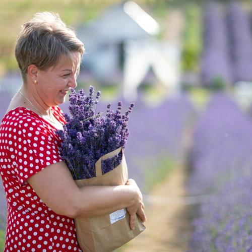 Photo Story: Lavender picking in Hungary