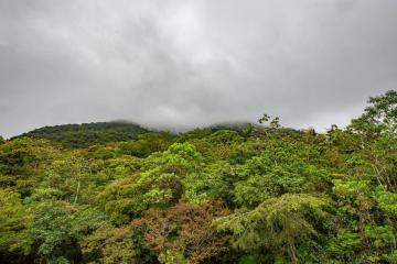 Photo Story – The cloudiest forest in Central America is a powerful carbon store