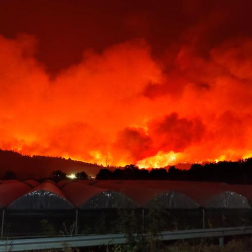 Greek PM approves 500 million euro budget for wildfire relief, reforestation