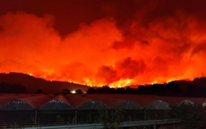 Thousands flee Greece blazes as wildfires sweep through Mediterranean