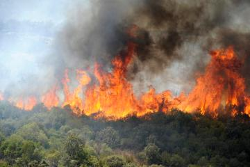 Algeria leader calls wildfires 'disaster', says 22 arsonists arrested