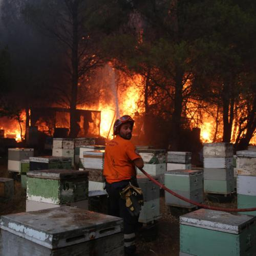 Greece on high alert as wildfires reach suburbs of Athens