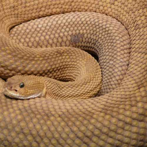 Snake venom may become tool in fight against coronavirus, Brazilian study suggests