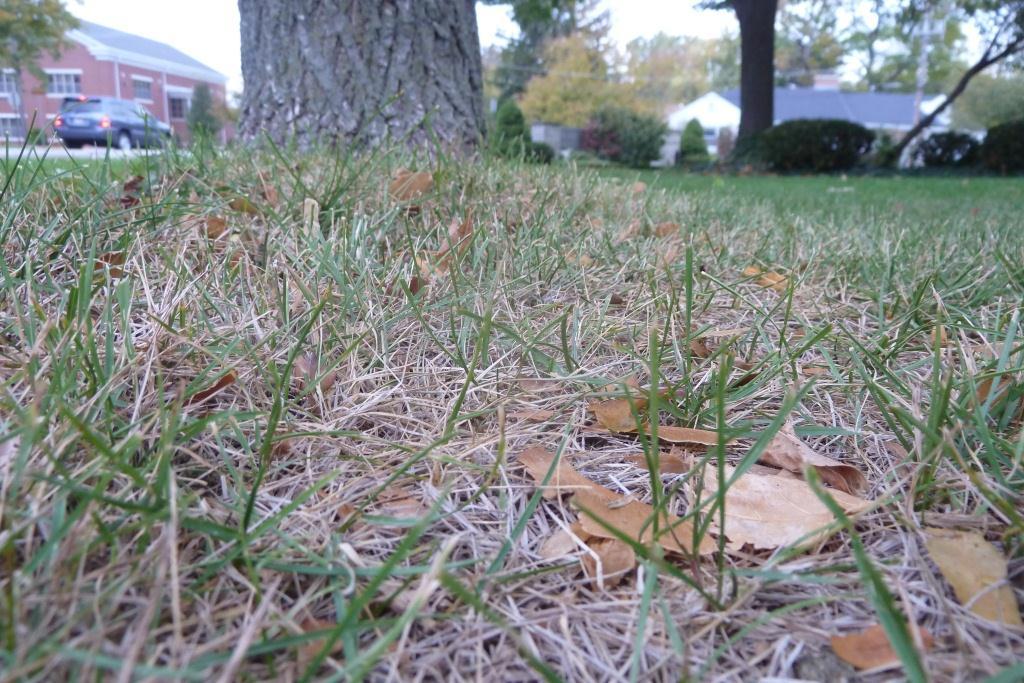 Does Mulching Leaves Harm Lawn