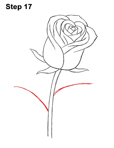 Rose Drawing Stock Photos And Images - 123RF