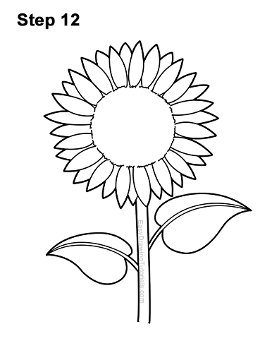 Sunflower Cartoon Drawing : sunflower, cartoon, drawing, Sunflower, VIDEO, Step-by-Step, Pictures