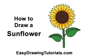 sunflower draw step easy flower drawing cartoon yellow learn instructions below very