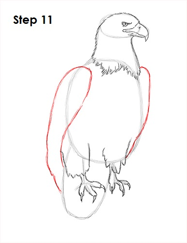 How to Draw an Eagle (Bald)