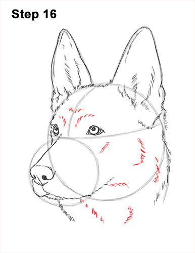 How To Draw A Puppy Face : puppy, German, Shepherd, VIDEO, Step-by-Step, Pictures