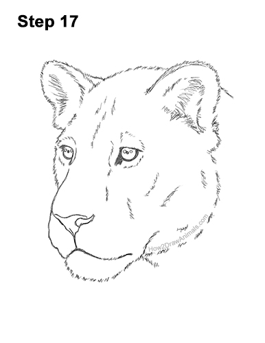 How to Draw a Lion - Step by Step Drawing... - Easy Peasy and Fun