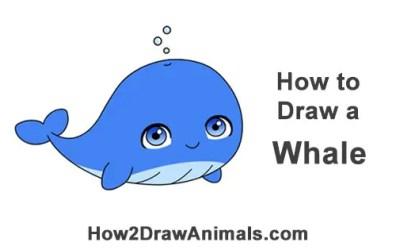 How to Draw a Whale Cartoon