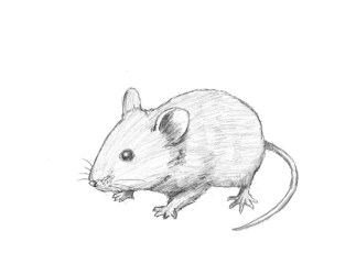 How to Draw a Mouse VIDEO & Step by Step Pictures