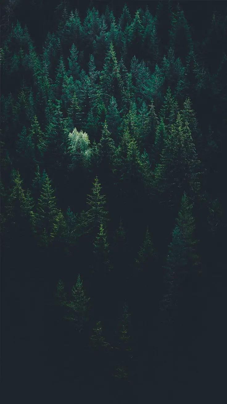 Dark Forest Iphone Wallpaper : forest, iphone, wallpaper, Bringing, Forest, IPhone, Wallpapers, Preppy