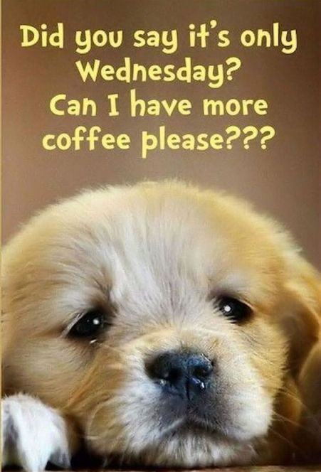 Wednesday Coffee Meme : wednesday, coffee, Wednesday, Coffee, Memes,, Images, Through