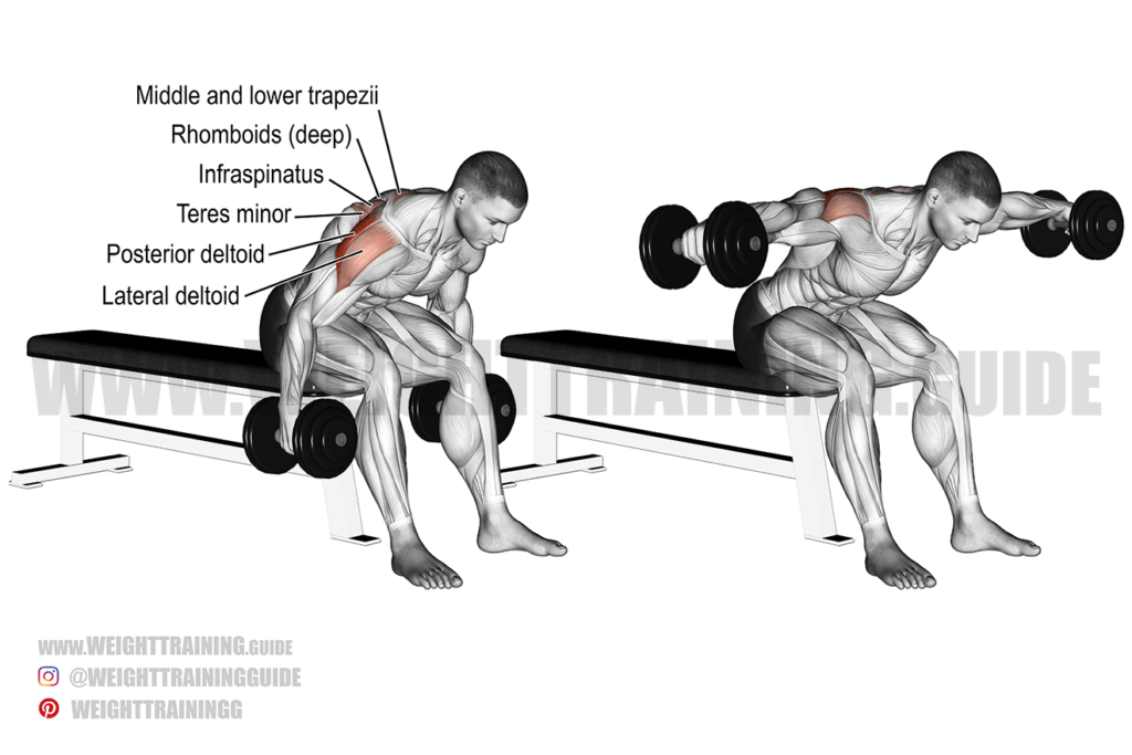 Seated reverse dumbbell fly instructions and video