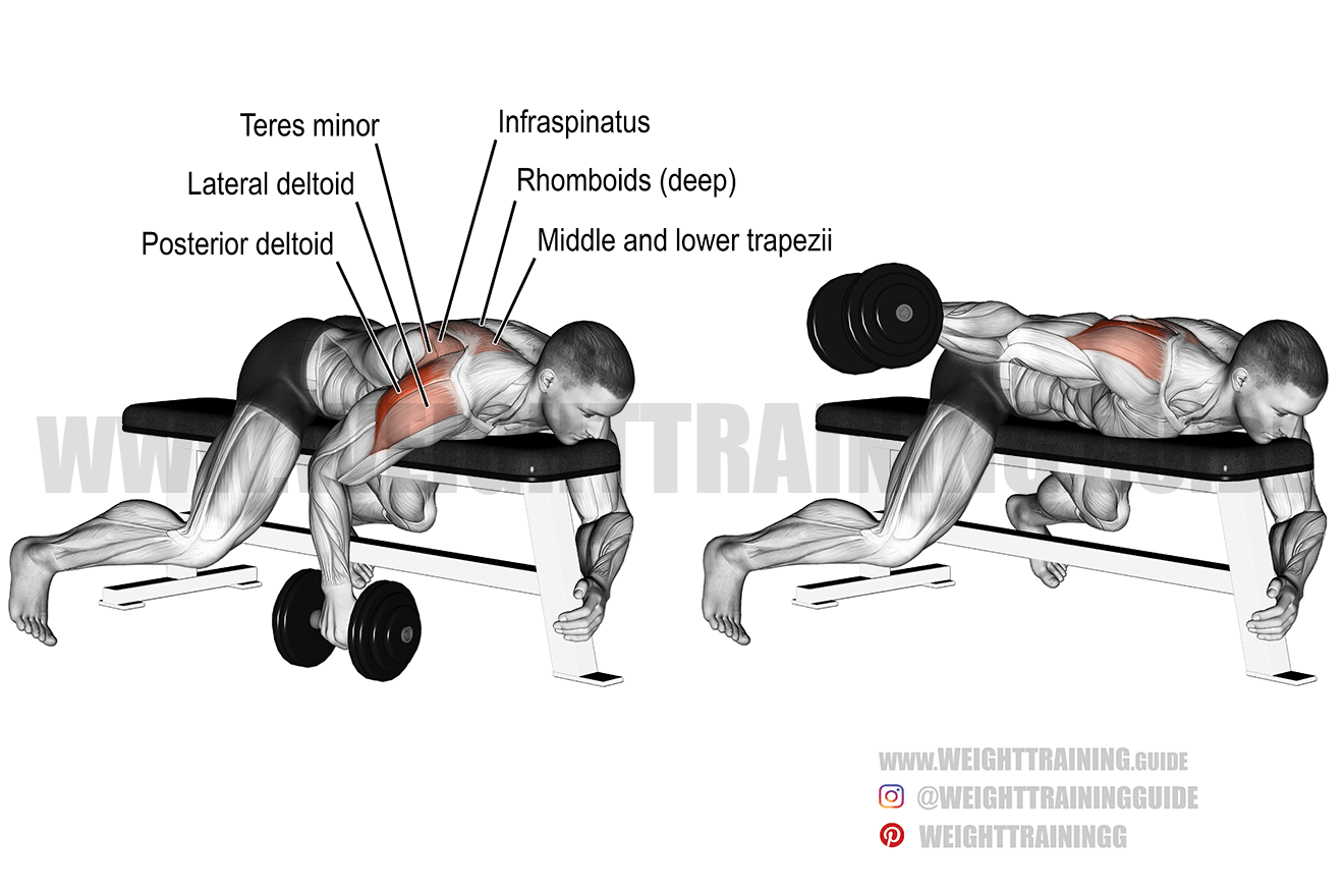 Lying one-arm reverse dumbbell fly exercise instructions