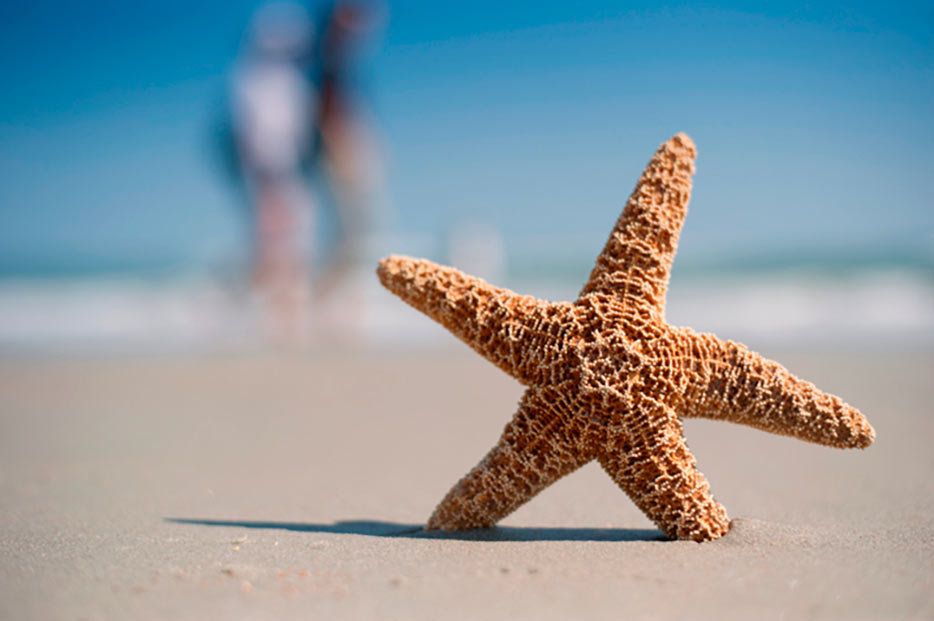 AF-S NIKKOR 50mm f/1.8G photo of a starfish in the sand with a nicely blurred background