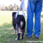 Gehhilfen Fur Hunde Tragegeschirr Tragegurt Und Tragehilfe Im Uberblick