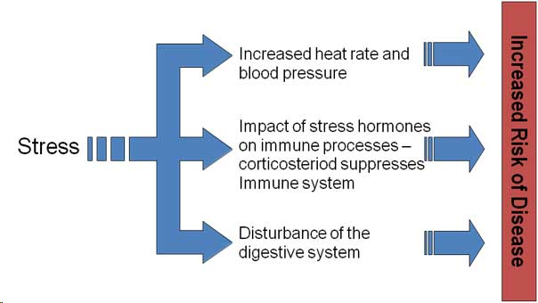 Stress Illness And The Immune System Simply Psychology