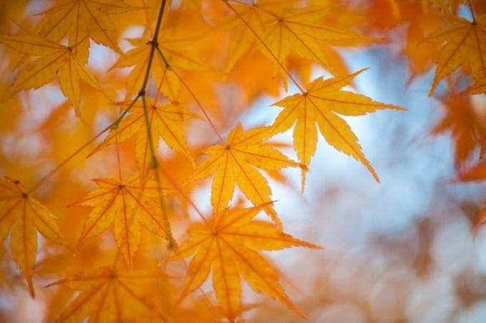 秋の熊本紅葉シーズン
