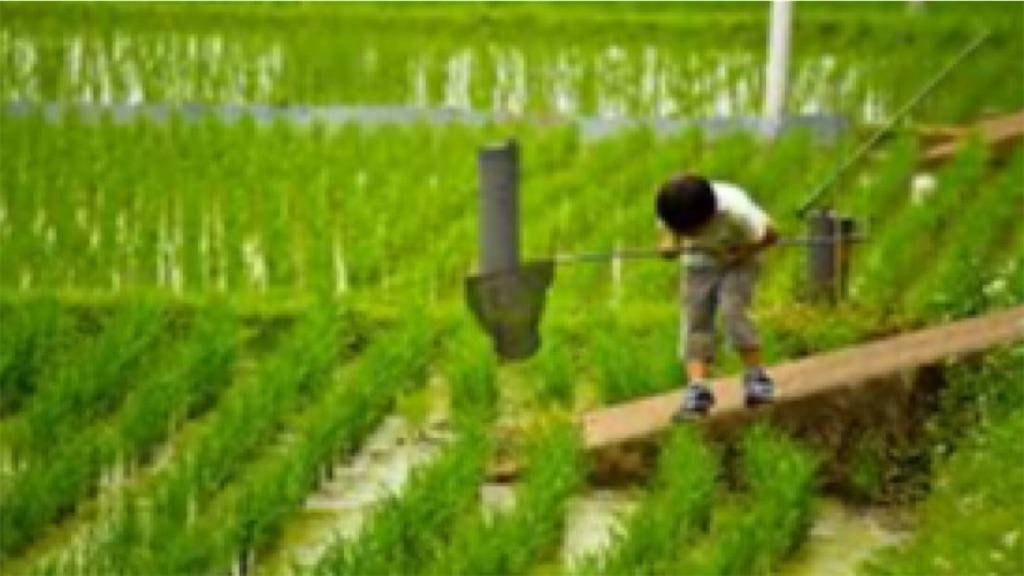 f:id:keeemura:20200720202928j:image