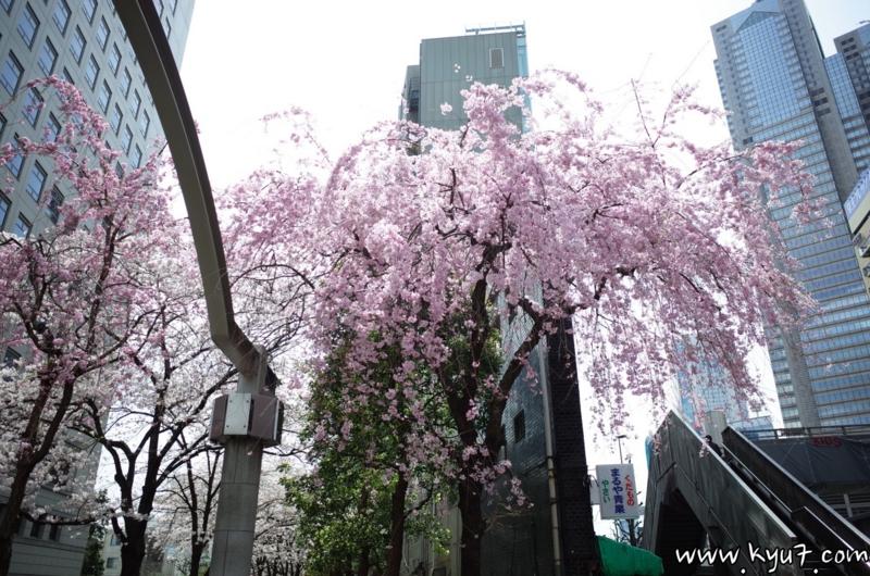 f:id:kyu_com:20170407164736j:plain