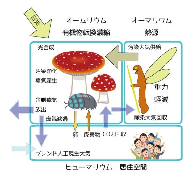 f:id:mushikurotowa:20170917152842j:image