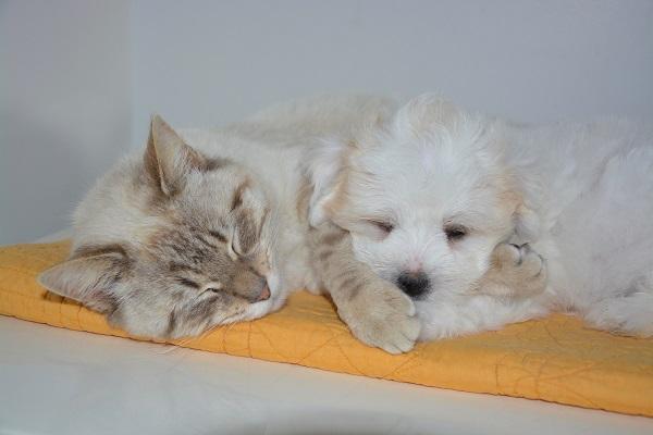 眠る子猫と子犬