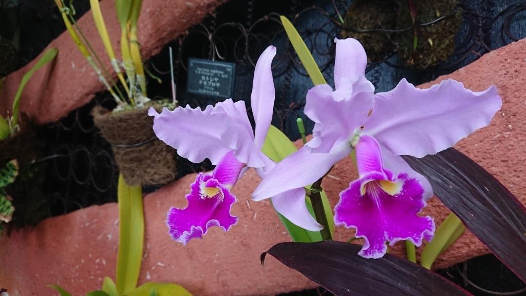 星の植物館内花