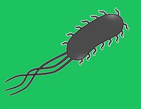 大腸菌の構造