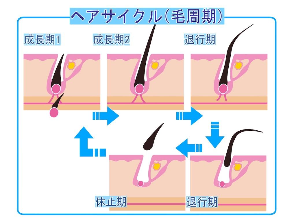 f:id:tetsuya-official:20200529161206j:image